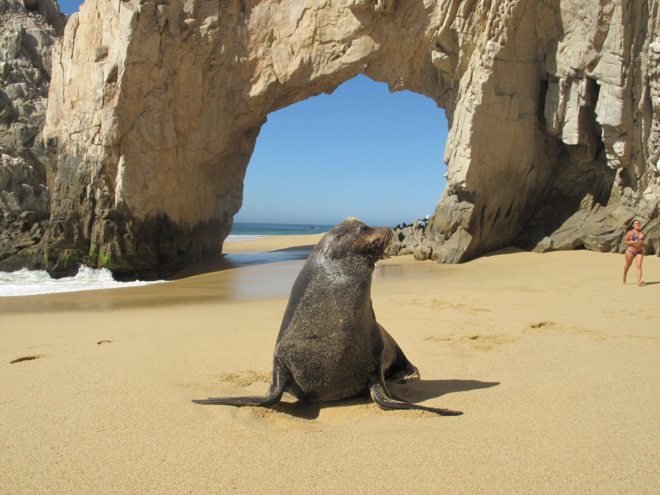 Arch cabo san lucas beach baja california mexico hightide los cabos