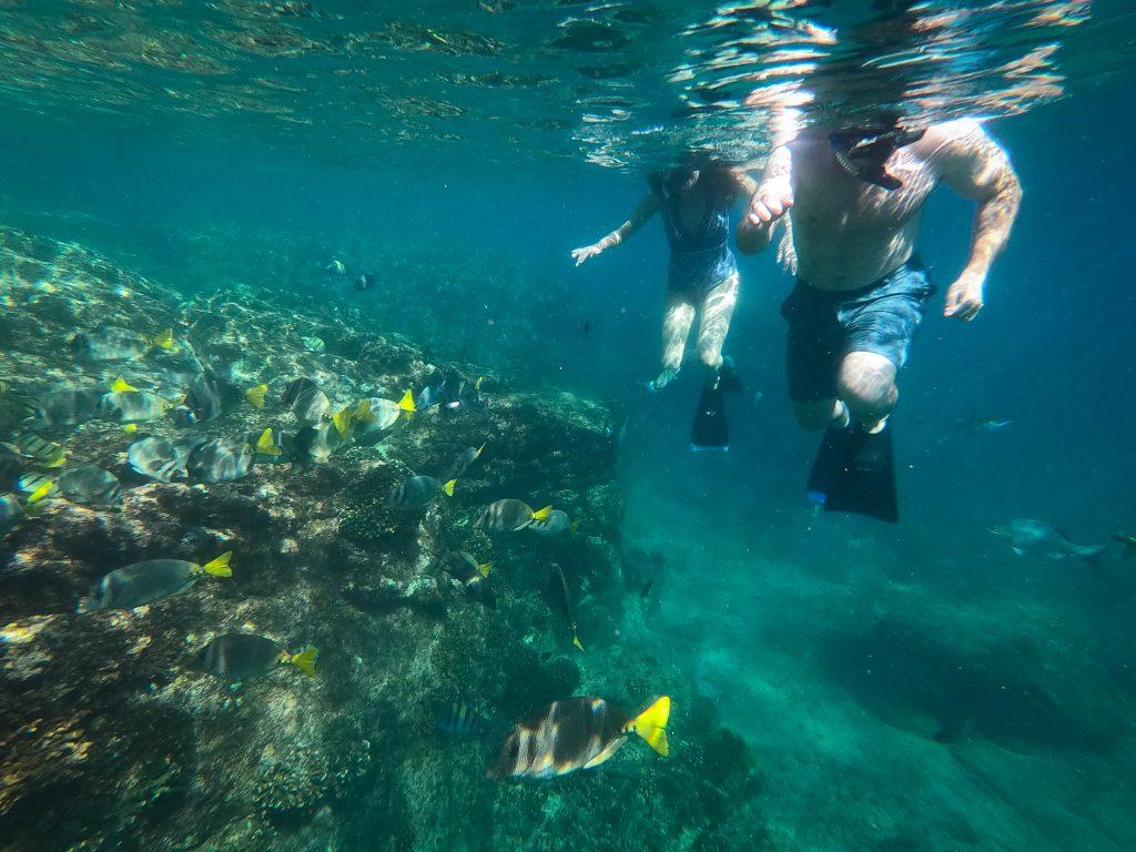 Snorkel high tide los cabos mexico